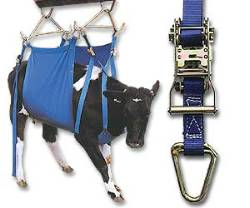 XL Daisy Heavy Duty Cow Lifter