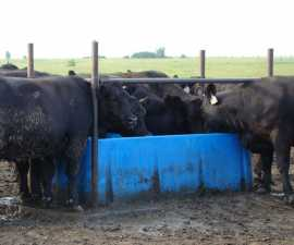 Open Trough Waterer Heated
